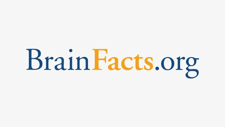 Brainfacts.org