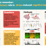 An infographic presented at the 2021 Virtual Brain Bee
